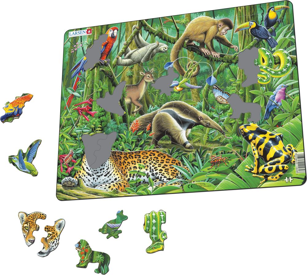 FH10 - South American Rainforest (Illustrative image 1)