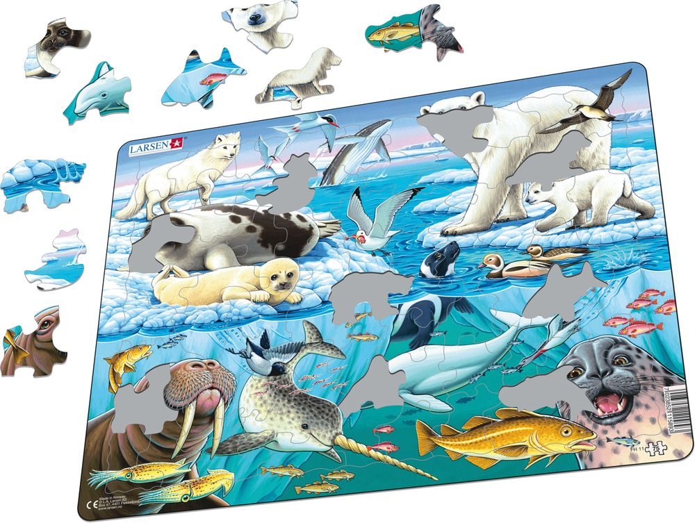 FH11 - Wildlife on and Around an Arctic Iceberg (Illustrative image 1)