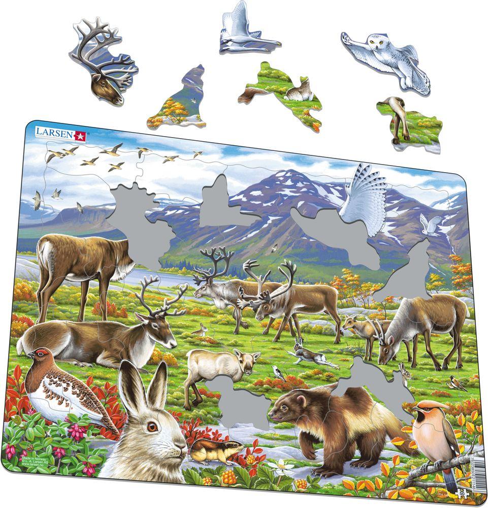 FH14 - Flora og fauna på den arktiske tundraen (Illustrasjonsbilde 1)