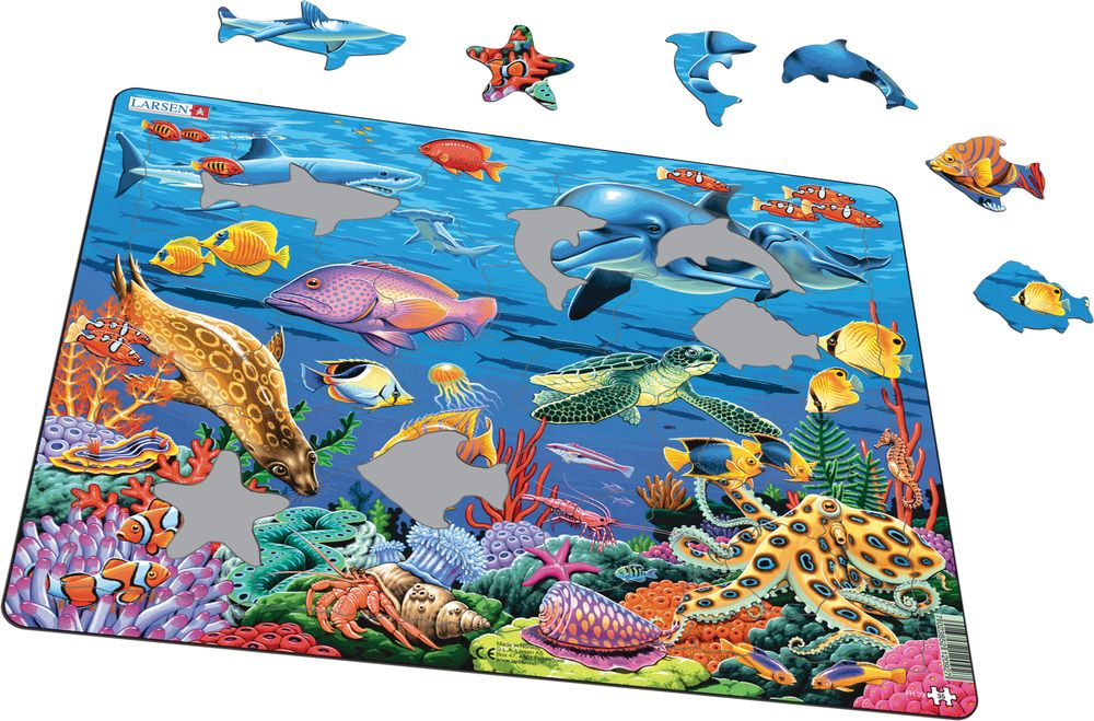 FH29 - Marine Life on a Coral Reef (Illustrative image 1)