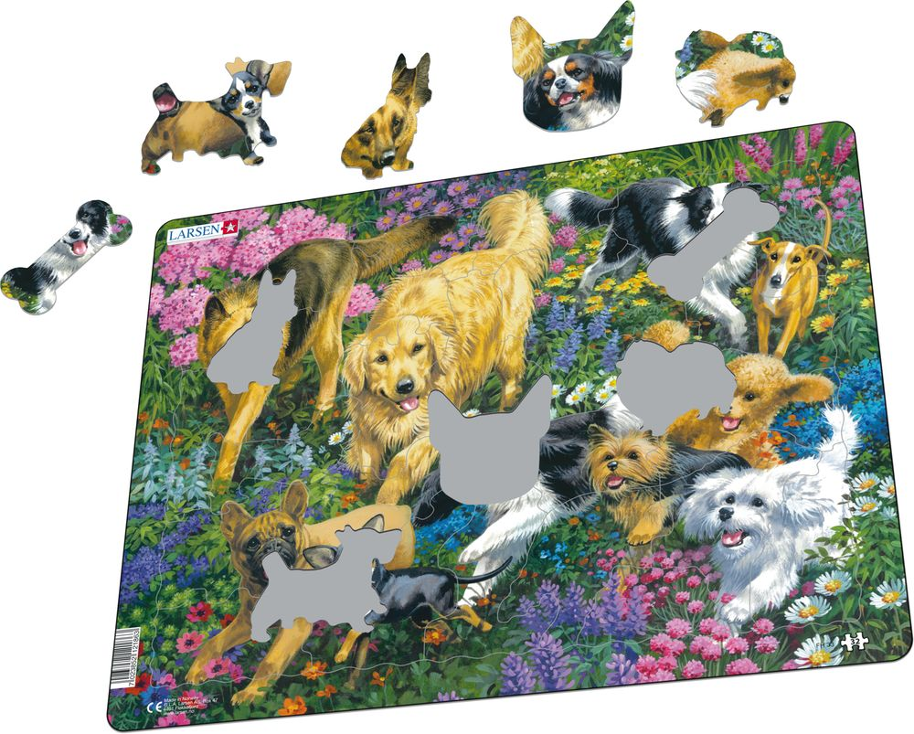 FH33 - Dogs in a field with flowers (Illustrative image 1)