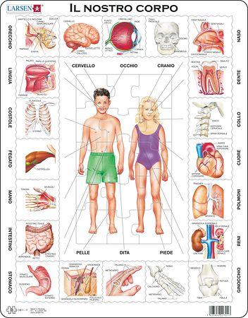 OB1 - Kroppen vår