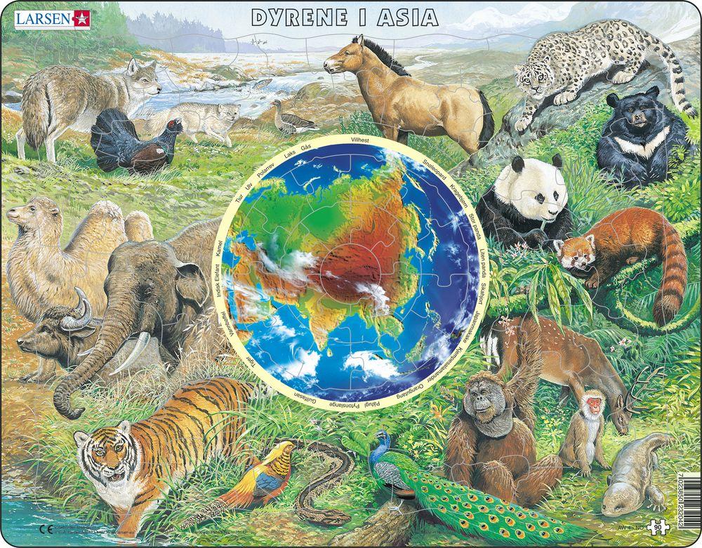 dyr i asia