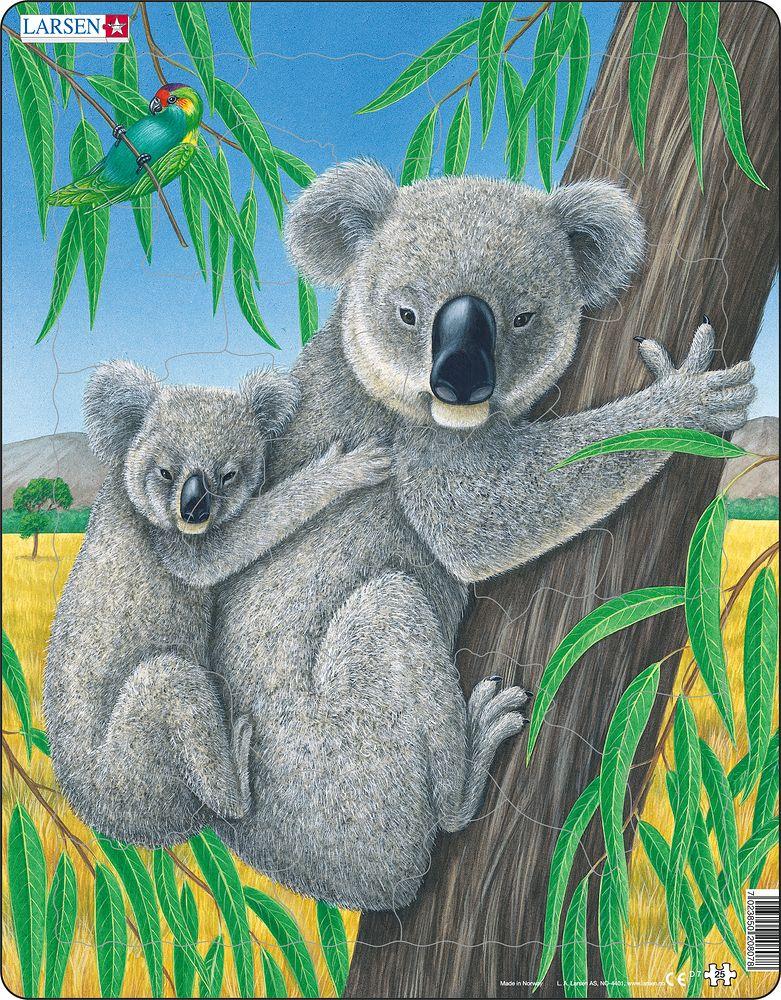 D7 - Koala (Nøytralt)