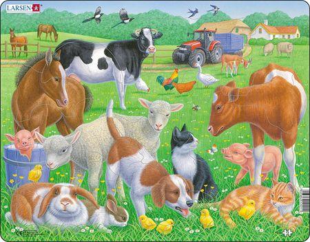 FH35 - Kjæledyr og gårdsdyr