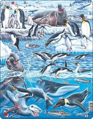 FH48 - Det kalde og vakre Antarktis